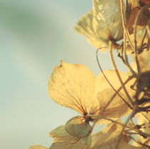 Golden Leaf by syoung-photography