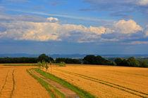 Weg durch die Sommerfelder von Wolfgang Dufner