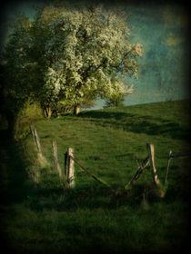 Frühling im Taunus by Elke Balzen