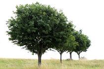 Baumreihe von Jens Berger