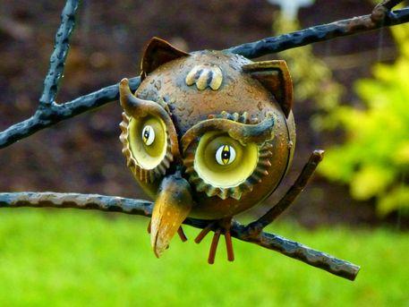 Wet-owl