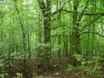 Grün im Wald von lorenzo-fp