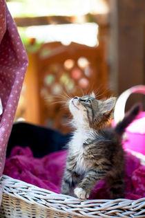 Sweet kitty by mira-arnaudova