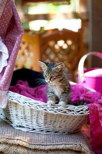 Kitty by mira-arnaudova