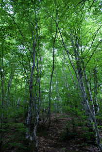 Forest by Tijana Krstevska