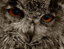 Eagle-owl-birds-of-prey