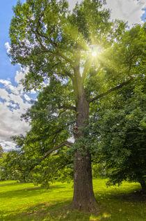 Strahlender Baum by leonardofranko
