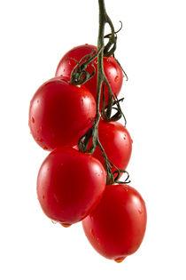 Five hanging tomatoes von Gert Lavsen