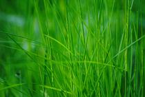 Green grass by Admir Idrizi