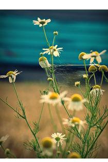 Vernetzt mit Blume  by Bastian  Kienitz
