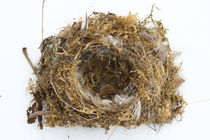 Vogelnest  Bird nest by hadot