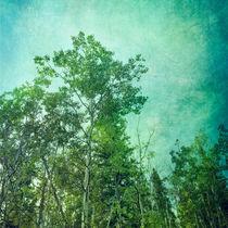 green woods von Priska  Wettstein
