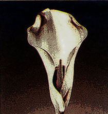"CALA LILY IN DARK VELVET © Luna Sconty"" by Luna Sconty"