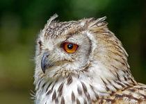 Eagle Owl von John Biggadike