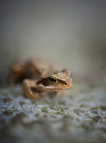 Little frog by Maria Inden
