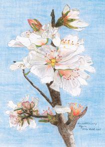 Mandelblütenzweig Algarve von Ulrike Kröll
