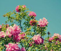 Pink Flowers by Melissa Timpson