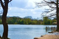 Lake by Melissa Timpson