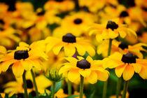 gelbe Blumen von Martin Dzurjanik