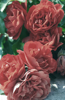 Red roses by Lina Shidlovskaya