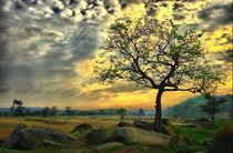 Padley-tree