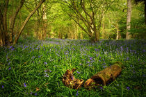Bluebell Wood 2 by Simon Gladwin