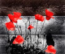 Urban Poppies 2 by Simon Gladwin
