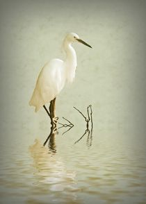 Little Egret by sharon lisa clarke
