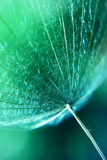 Schirm grün von Christine Bässler