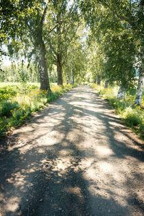 Birch alley by Kristiina  Hillerström
