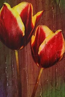 Tulpenfertig