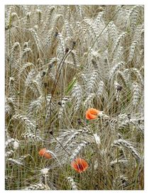 Getreide und Mohnblumen von Frank Wöllnitz