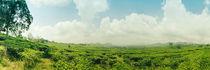 Tee-plantage-40-x-120-cm