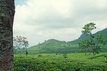 Teeplantage-mg-5199