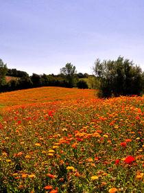 Blumenwiese auf Langeland by Mandy Siemon