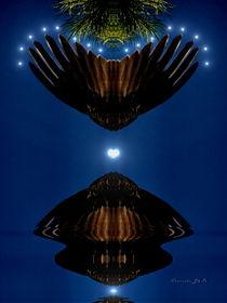 Wings by Panda Broad