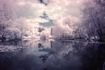 Lilac Reflections at Watermead Park von Simon Gladwin