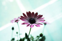 Pink flower by Christine  Vie