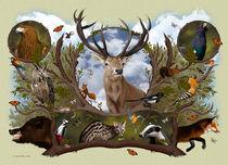 Woodland by Fernando Ferreiro