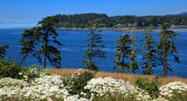 Sooke-harbour0144
