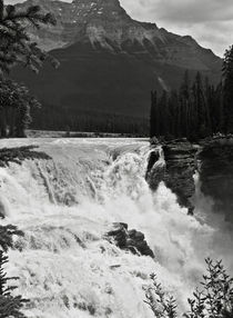 Canada-julio-2007-jasper-national-park-cataratas-athabasca-373-cut-bwgg