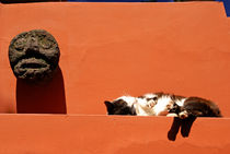 SLEEPING CAT Mexico City von John Mitchell