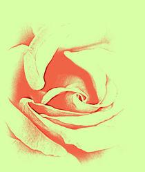 Rose Art. by rosanna zavanaiu