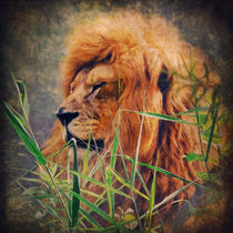 A Lion Portrait by AD DESIGN Photo + PhotoArt