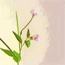 Broad leaf willow herb by sharon lisa clarke