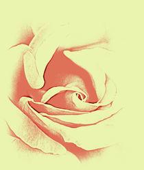 Rose sillouette by rosanna zavanaiu