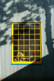 WINDOW IN LIGHT AND SHADOW by John Mitchell