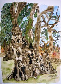 2000-jähriger Olivenbaum in Piedras del Ray – Portugal von Ulrike Kröll