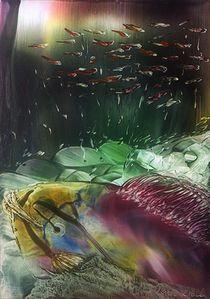 Schönheit der Unterwasserwelt  von Ulrike Kröll