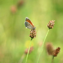 Sommerbrise by Photo-Art Gabi Lahl